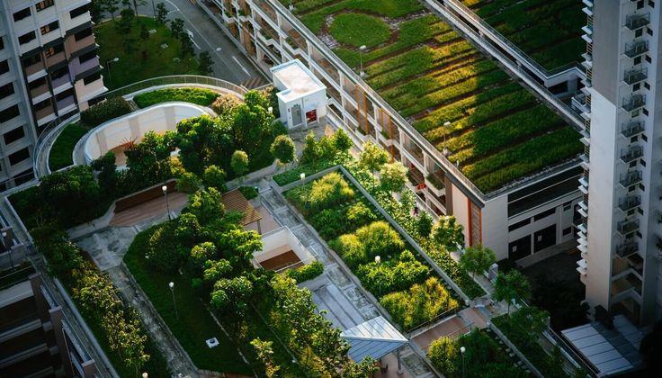 Intenzívna zelená strecha pre lepší zážitok zo zelene