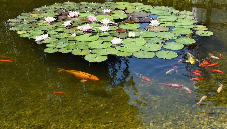Vybudovanie záhradného jazierka
