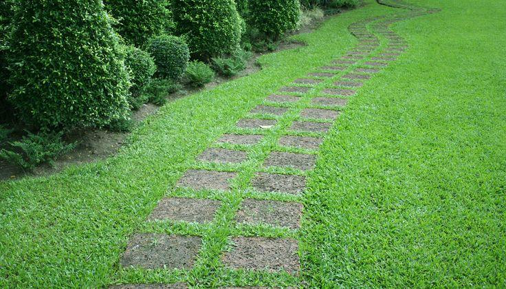 Ako vypestovať a udržiavať zdravý trávnik?