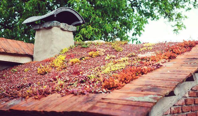 Zelená vegetačná strecha