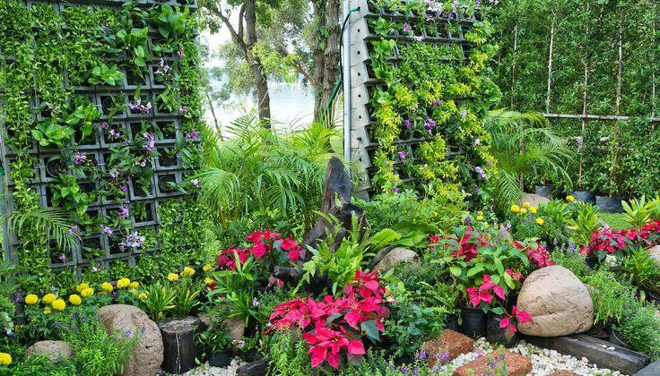 7 úžasných okrasných tráv pre záhradu